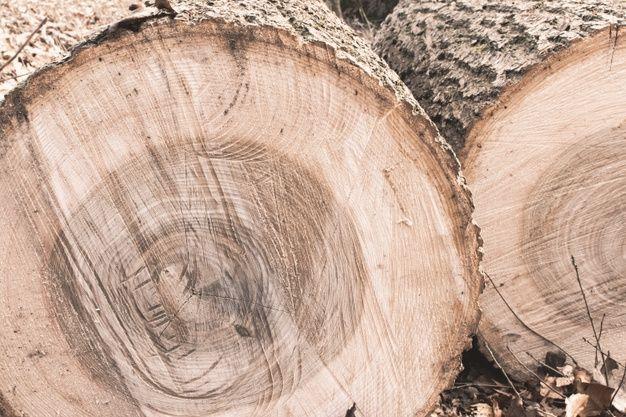 sandalias de madera sostenible